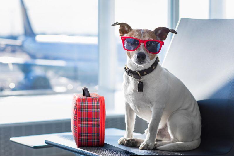 transportarea animalelor in avion cunoaste-ti drepturile